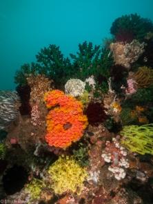 Hard and soft corals at Kerikite