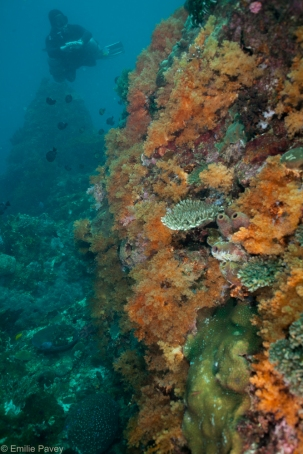 Reeftop at Talisayan, Almagro Island
