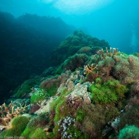Underwater landscape Kerikite