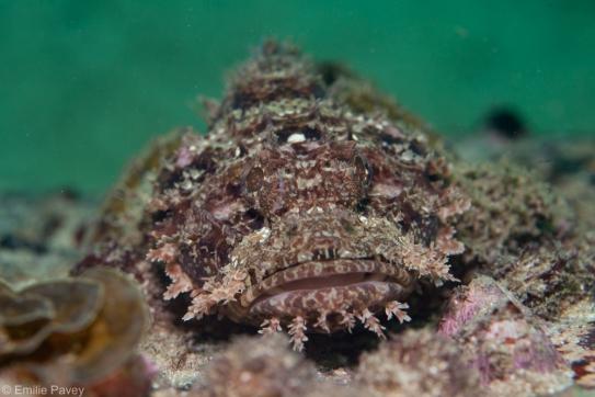 Scorpionfish Hong Kong