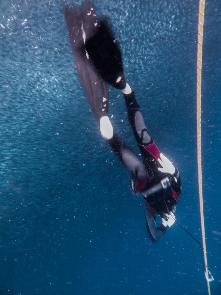 freediving-1803