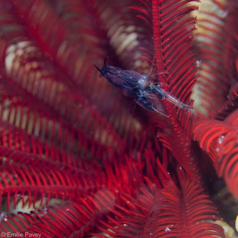 shrimp800-9345