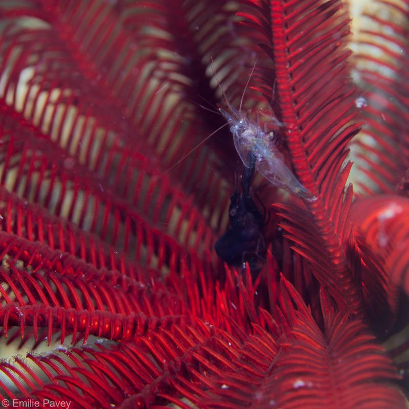 shrimp800-9346