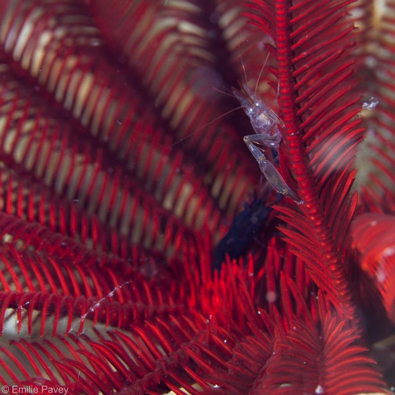 shrimp800-9347