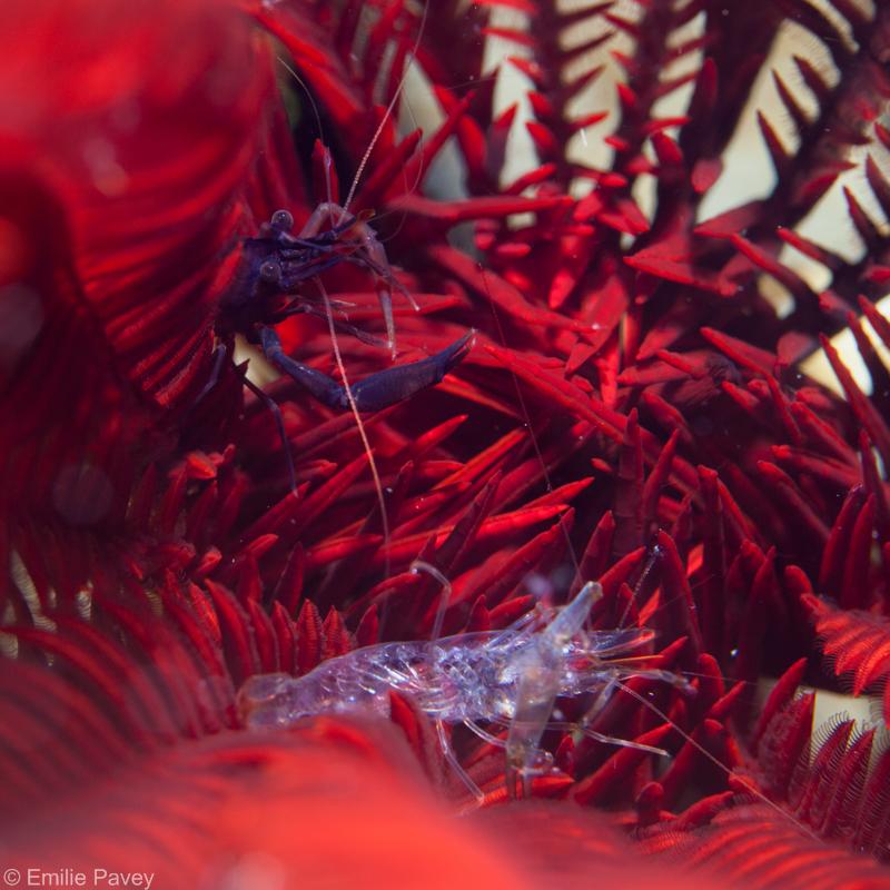 shrimp800-9350