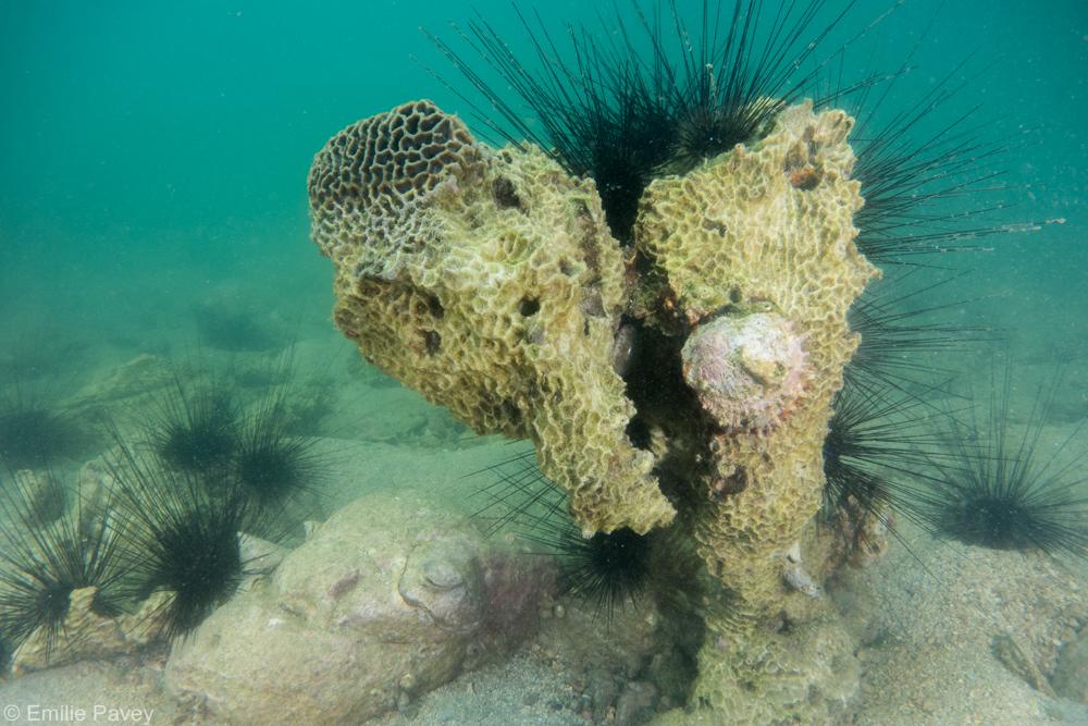 coral skeletons