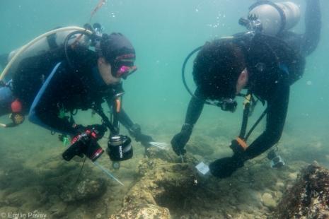 coral volunteers 3