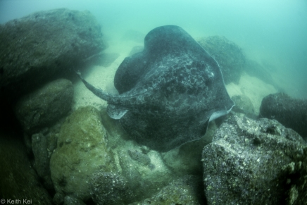 Stingray Breaker Reef
