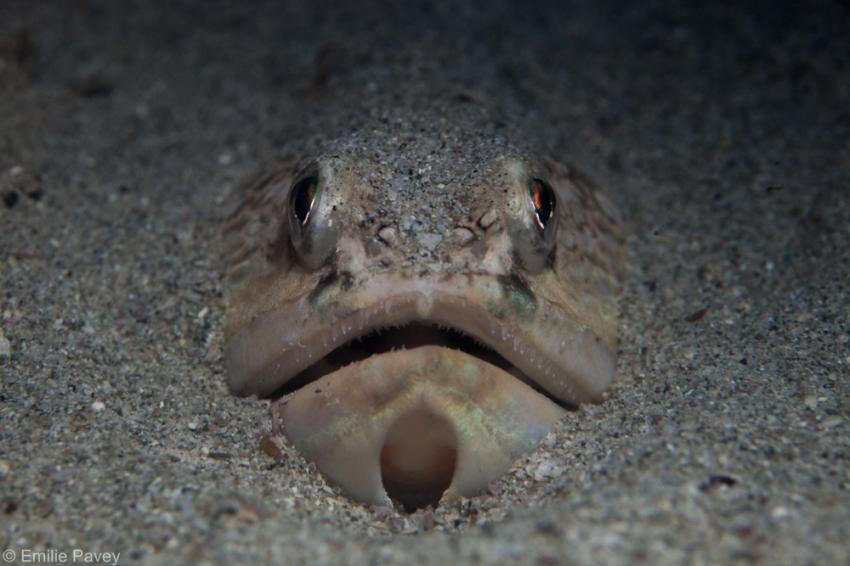 Snakefish Hong Kong