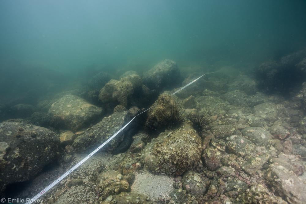 HK reef check transect line
