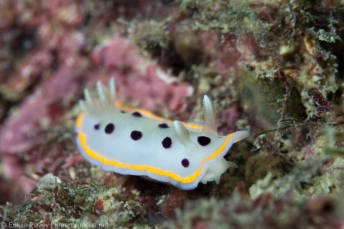 Nudibranch Hong Kong