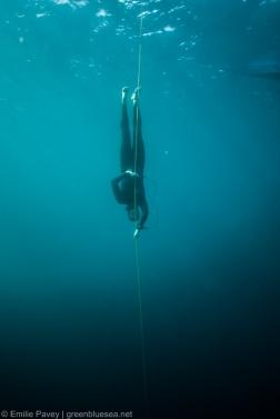 SEA CNF-7262
