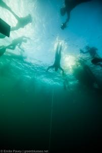 SEA CNF-7424