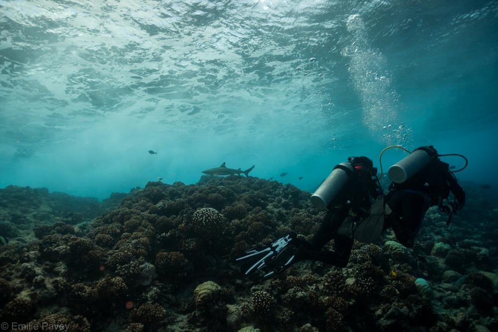 divers on reeftop