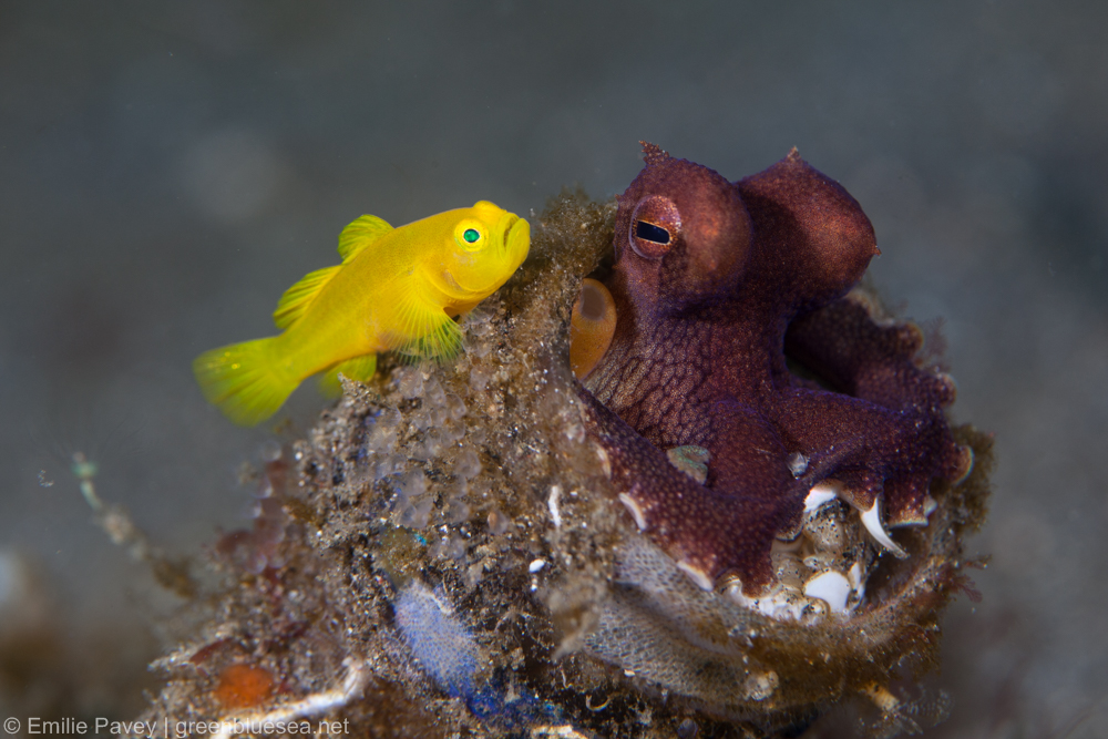 Exploring the Lembeh Strait